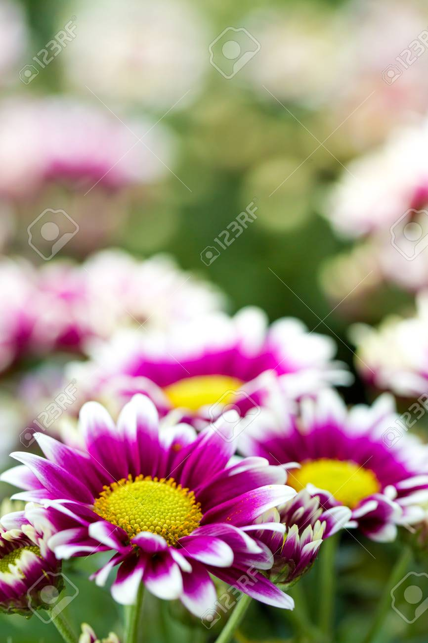 Blumen Für Den Garten Gelbe Blumen Für Den Garten Blumen