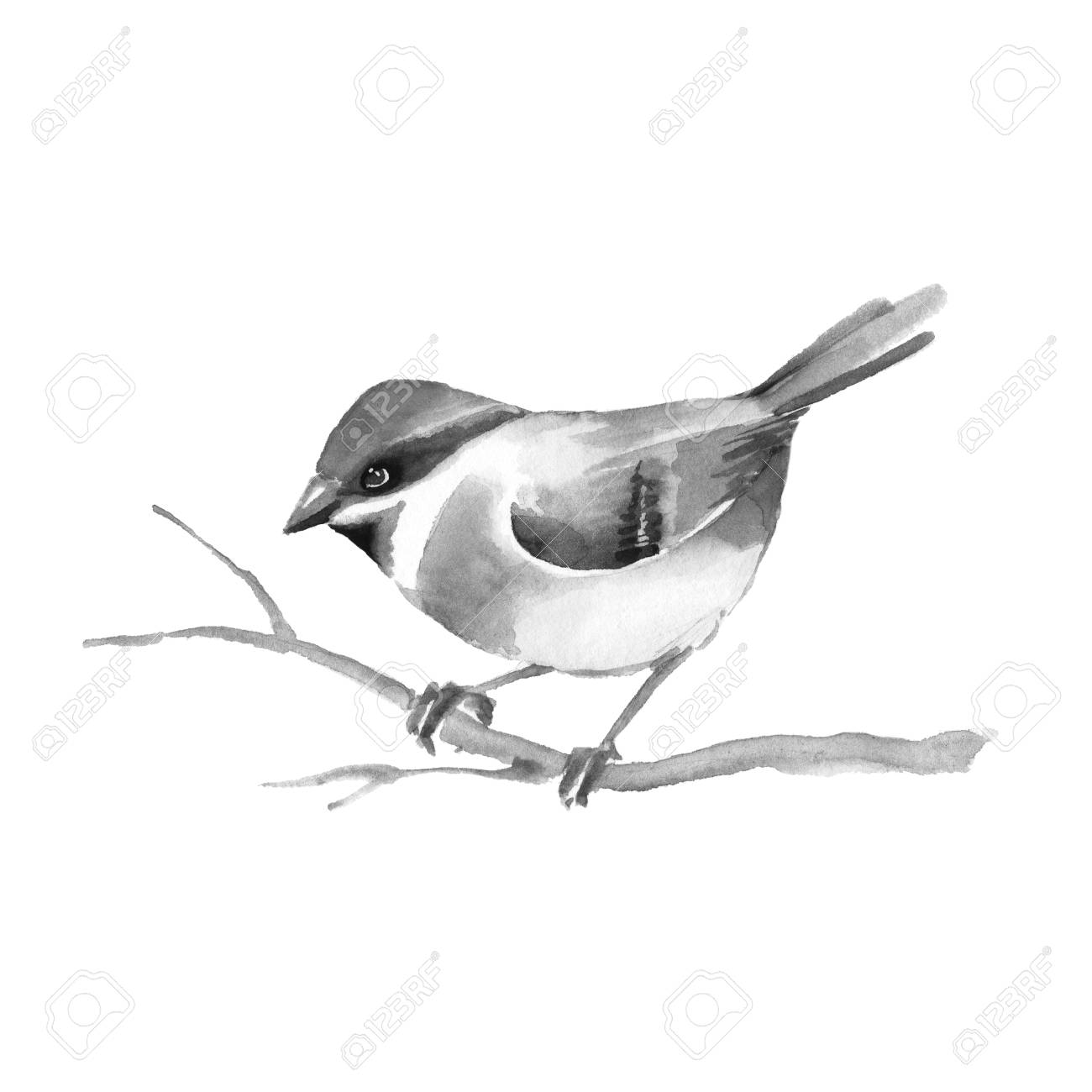 Vogel Schwarz Stock Photo