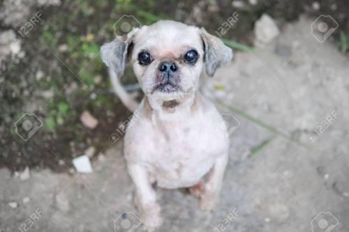 Medium Of Ugly Dog Breeds