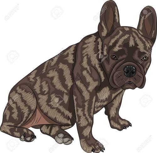 Medium Of Brindle Dog Breeds
