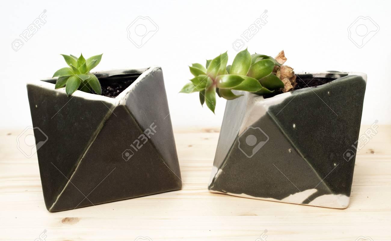 Schöne Zimmerpflanzen Schöne Zimmerpflanzen In Hölzernen Regal