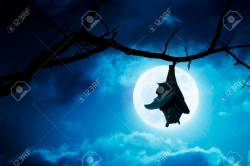 Alluring A Full Moon Stock Photo This Creepy Halloween Bat Hangs Upside Down From A Brokentree Branch Clouds This Creepy Halloween Bat Hangs Upside Down From A Broken Tree