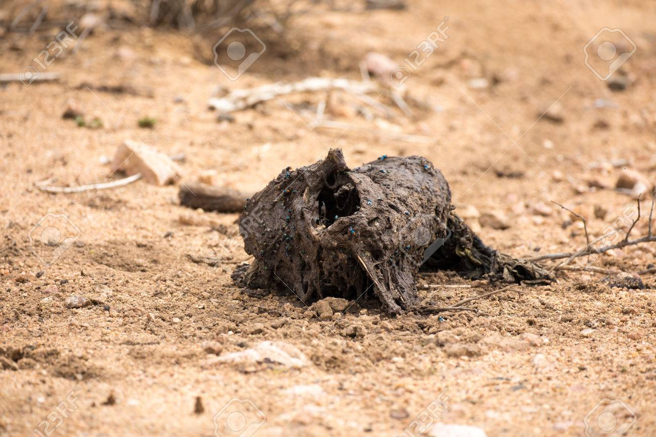 Glasregal Rot Rotting Animal Carcass In Kruger National Park South Africa