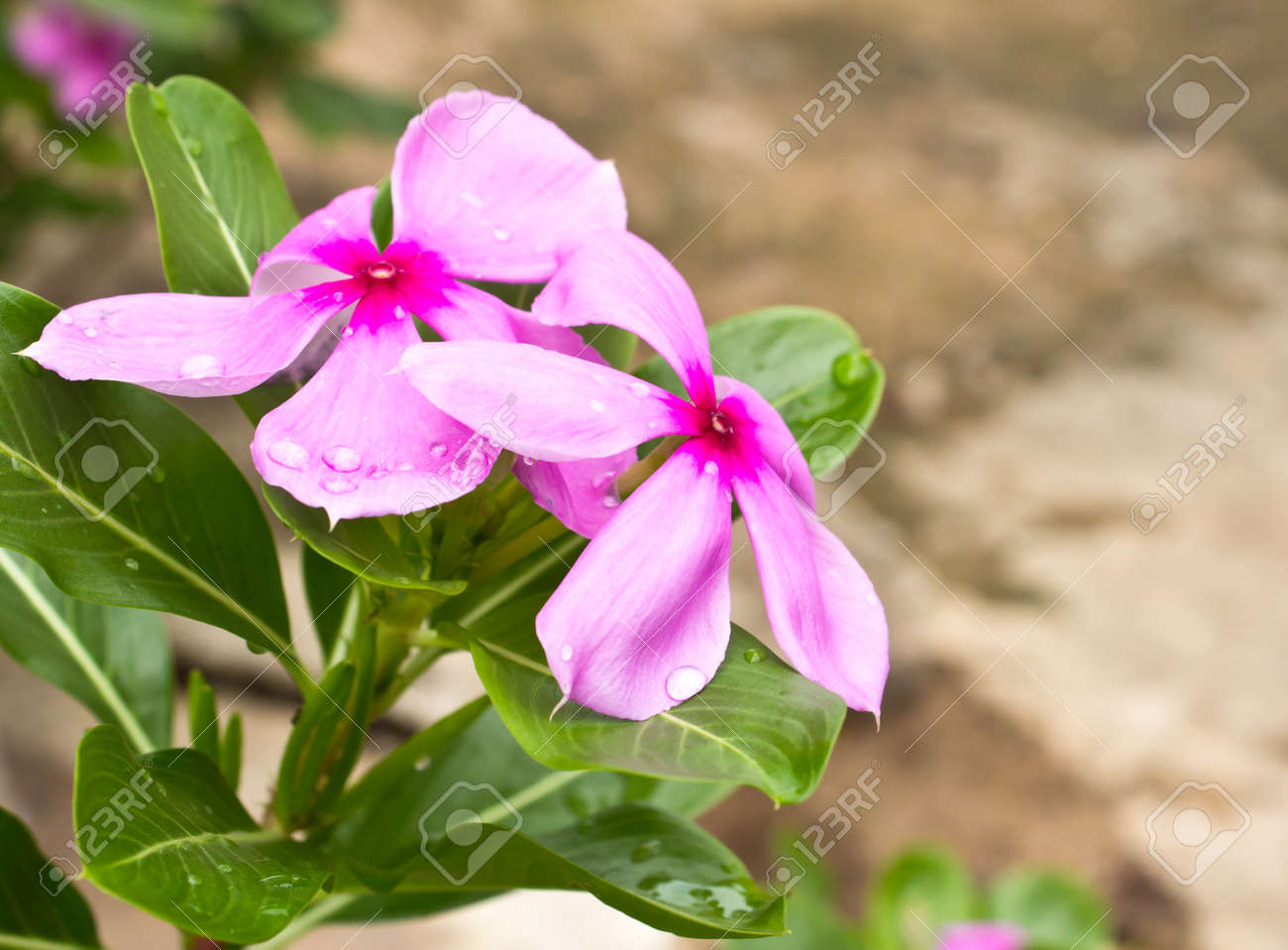 Common Garden Flowers Pink garden flowers names