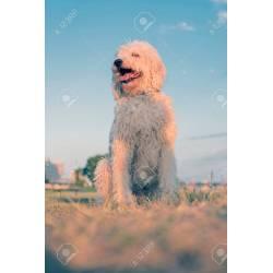 Small Crop Of Big Fluffy Dog