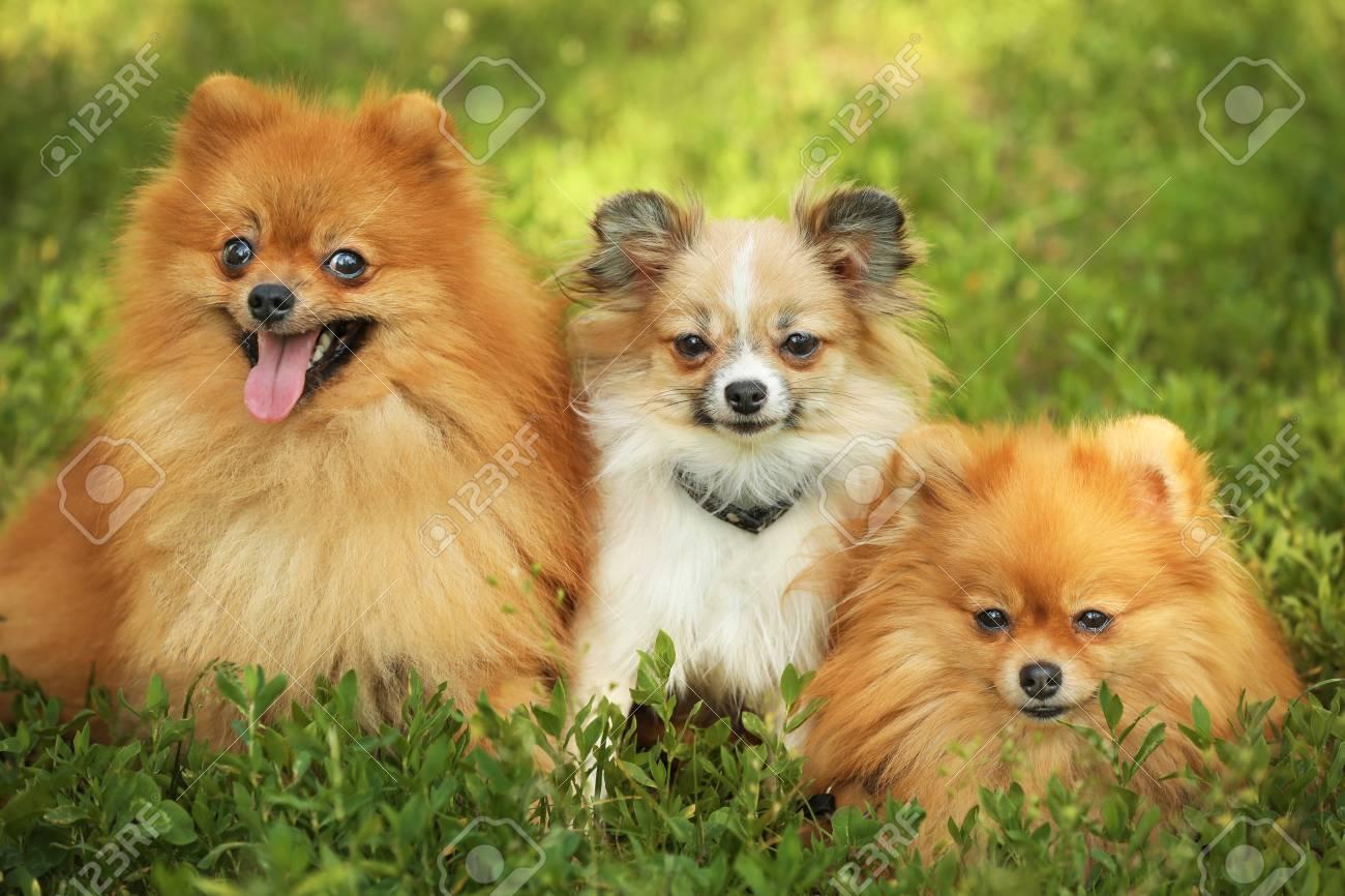 Fullsize Of Cute Fluffy Dogs