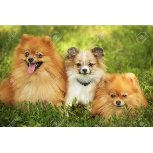 Medium Crop Of Cute Fluffy Dogs