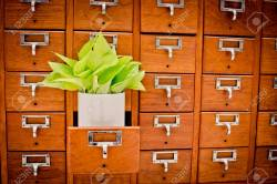Perfect Library Or Filing Archive Stock Photo Tree On Open Wooden Cabinet Boxes Library Or Filingarchive Reference Card Knowledge Base Education Focus Tree On Open Wooden Cabinet Boxes