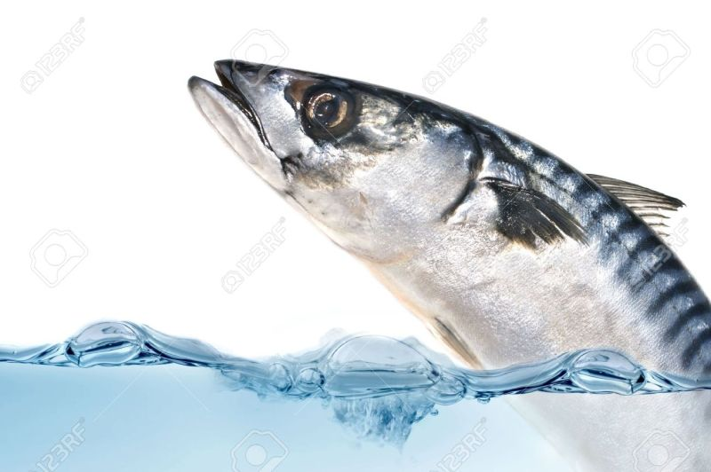 Large Of Fish Jumping Out Of Water