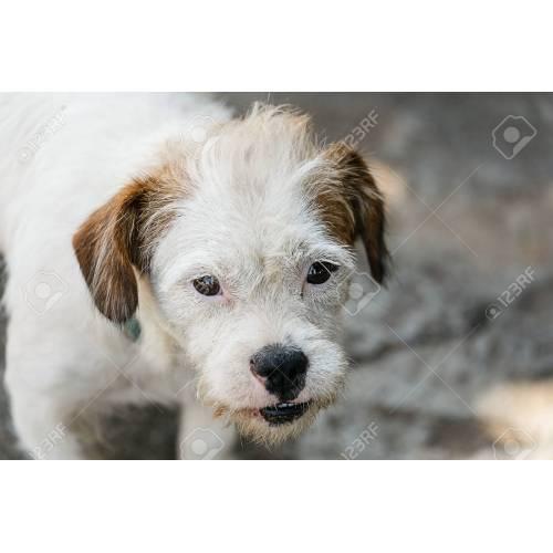 Medium Crop Of White Dog Breeds