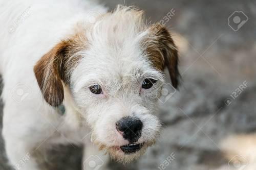 Medium Of White Dog Breeds