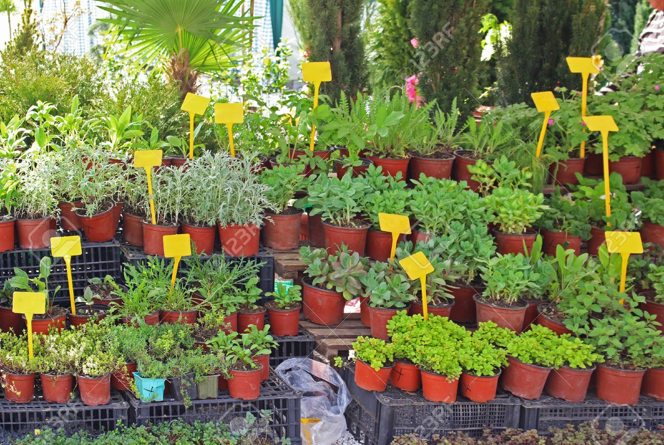 Small House Plants With Flowers Small House Plants In Flower Pots Sold On Market Stock Photo