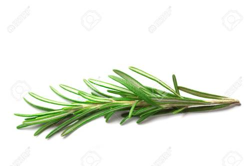 Marvelous Royalty Free Image Sprig Small Rosemary Sprig Stock Photo Small Rosemary Sprig Stock Rosemary Rosemary Song 1 Sprig
