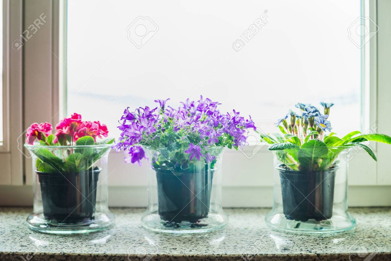 Blumen Fensterbank Stock Photo