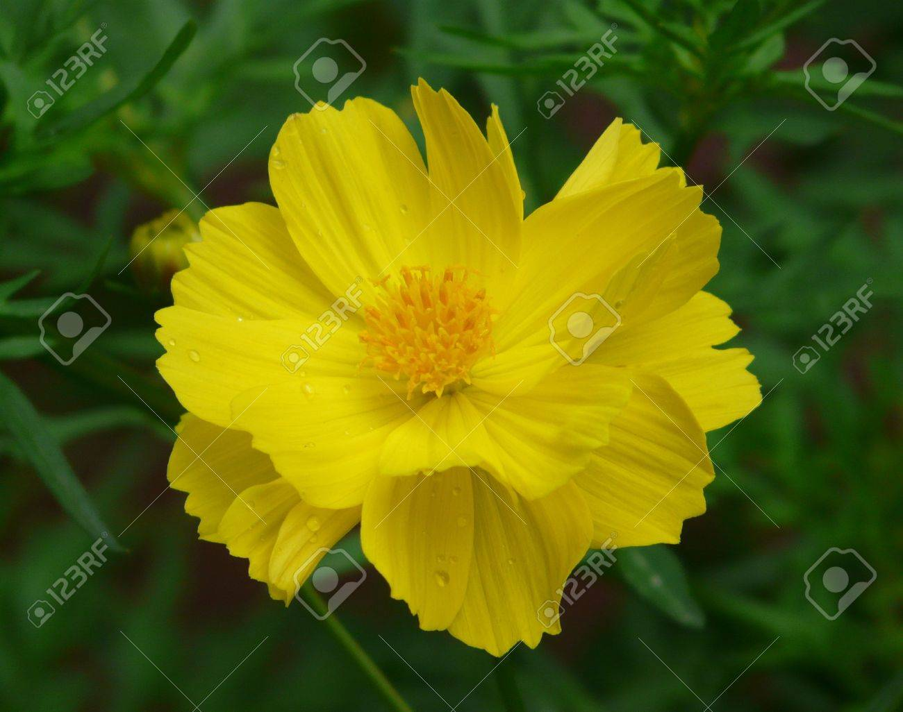 Common Yellow Garden Flowers