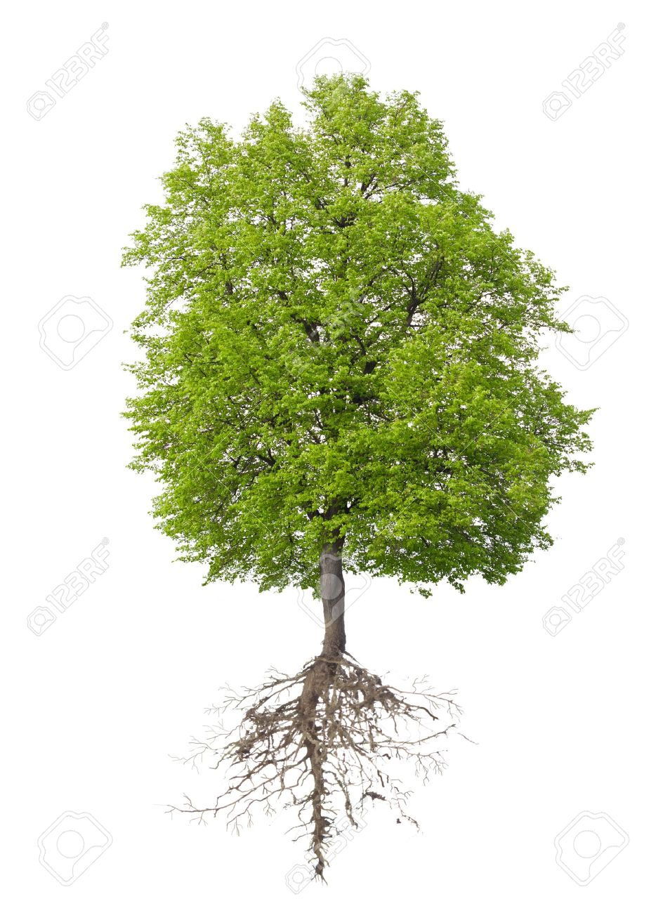 Bild Baum Stock Photo