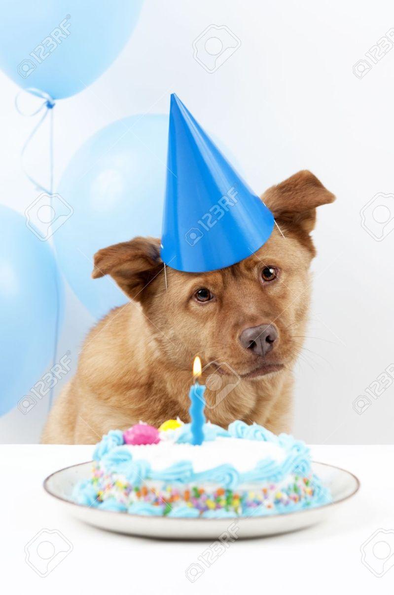Fullsize Of Dog Birthday Cake Large