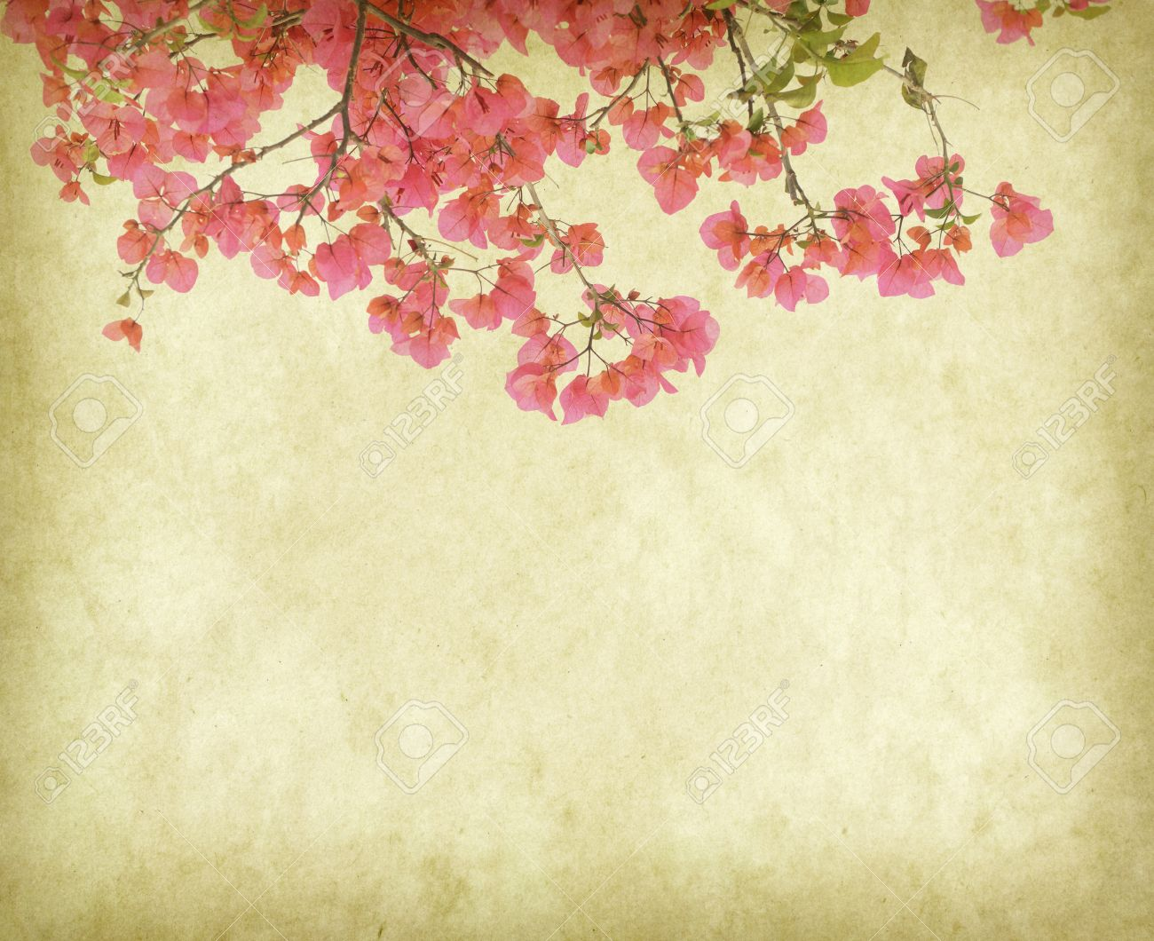 Bougainvillea Wallpaper Vintage Wallpaper Background With Bougainvillea Flowers