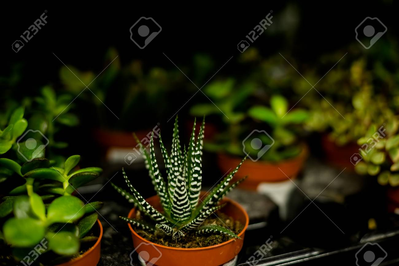 Small House Plants With Flowers Succulent Plantsmodern Room Decoration Cactus House Plants Collection Small