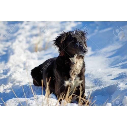 Medium Crop Of Asian Dog Breeds