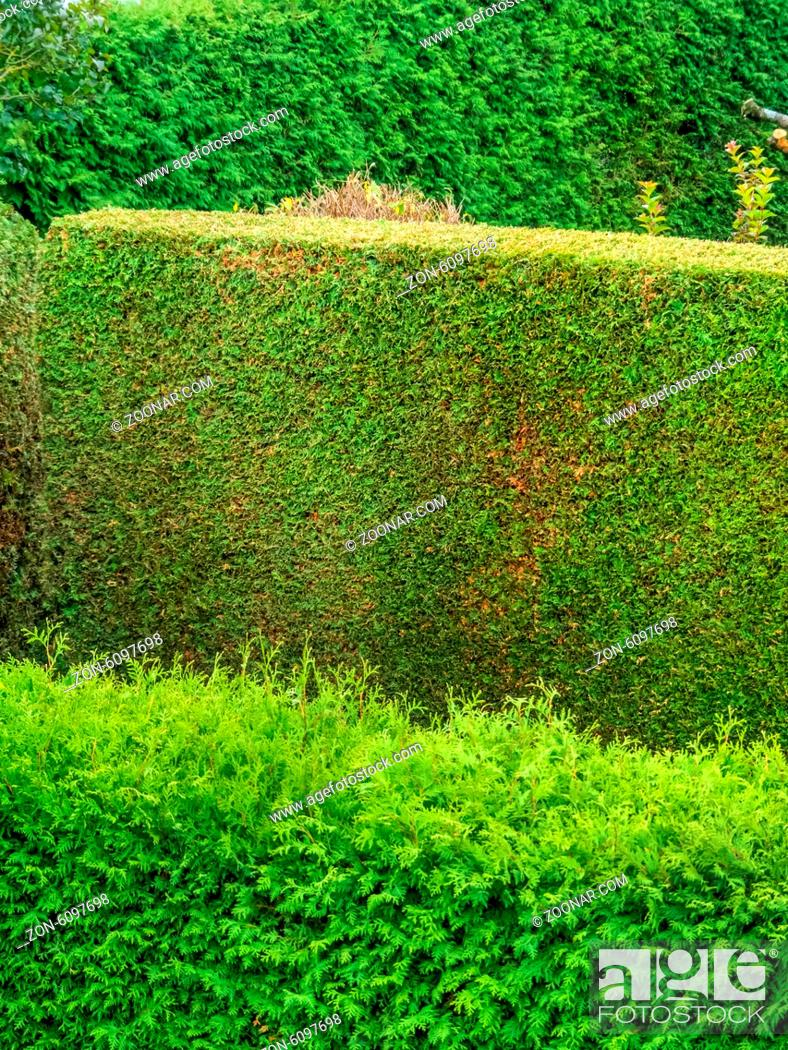 Gartengestaltung Hecke Eine Hecke Aus Thujen Als Sichtschutz In Einem Garten. Geschnitten Und Ungeschnitten, Stock Photo, Picture And Rights Managed Image. Pic. Zon-6097698 | Agefotostock