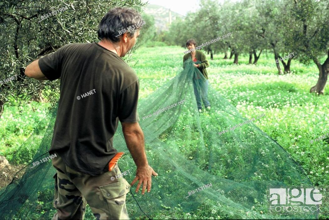 OLIVE TREE PLANTATION\u003cBR\u003ePhoto essay\u003cBR\u003eOlive farming near St