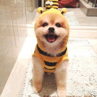Prince Spot  Cute Dog Costumes Ideas by Marni and Cubby