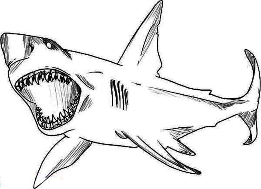 Disegni da colorare disegni da colorare squalo leuca for Disegno squalo bianco