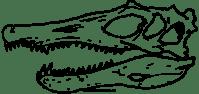 Cranio Spinosauro Disegni Da Colorare - Ultra Coloring Pages