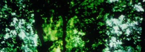 vlcsnap-2010-04-30-00h10m47s225-474x170