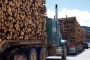 Kosova humbi në 1603 lëndë të vjedhjes së pyjeve
