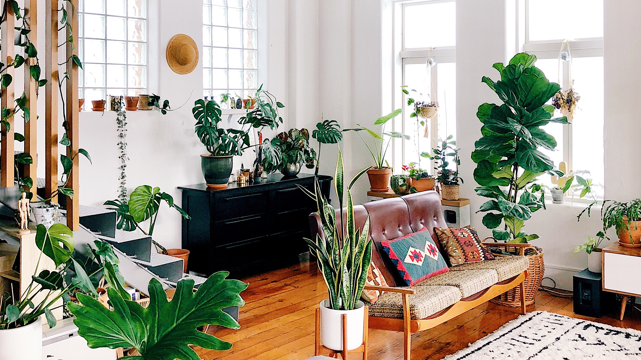 Unusual House Plants For Sale Houseplants Enjoy A Growth Spurt In Popularity Financial Times