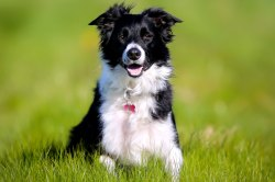 Small Of Healthiest Dog Breeds