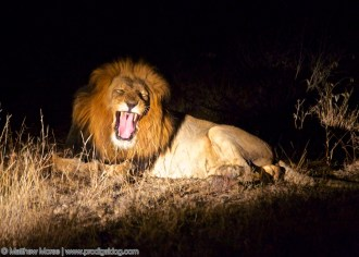 Finding Your Big Five Lion