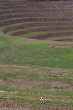Our site mascot explores the Moray Inca site!