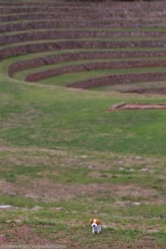 Our site mascot explores the Moray Inca site!