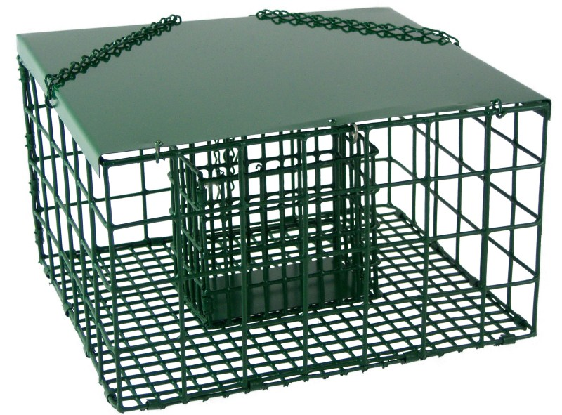 Large Of Squirrel Proof Suet Feeder