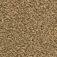Top 28+ - Empire Flooring And Carpet - shaw carpet sles ...