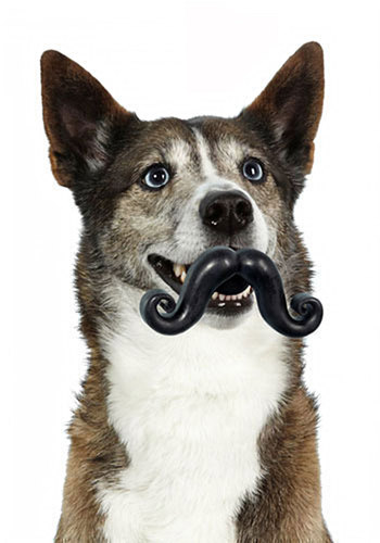 Sit, Stay, 'Stache Pet Toy