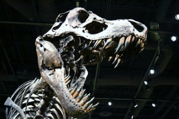 OSC Dinosaur