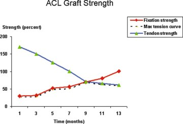 ACL graft strength