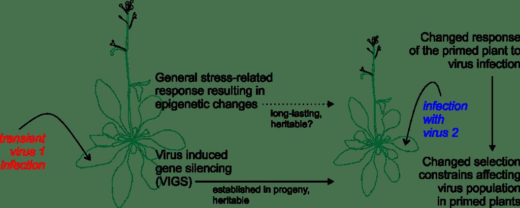 Hypothesis_scheme_phase2