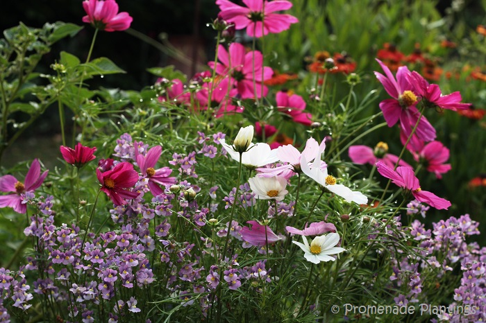 English cottage garden flowers an english country cottage garden