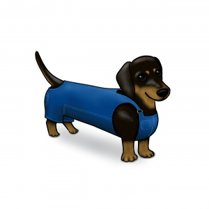 Dachshund in dungarees