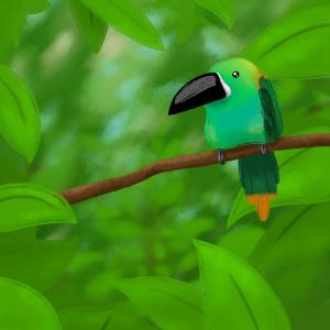 Andean Toucan bird illustration