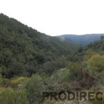 Riverside valley for sale in central Portugal Góis - PD0013