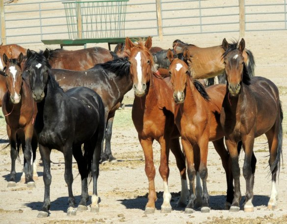 Protect Mustangs . org & Photo © Taylor James