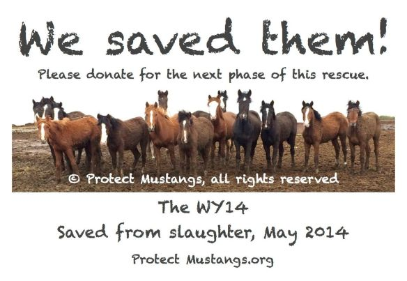© Protect Mustangs, all rights reserved