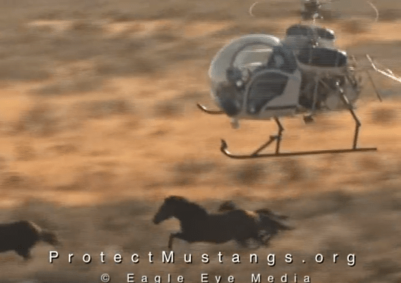 PM Helicopter Mustang Roundup