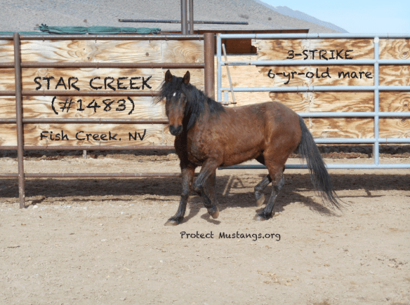 PM Star Creek #1483 Fish Creek 3-Strike Sale